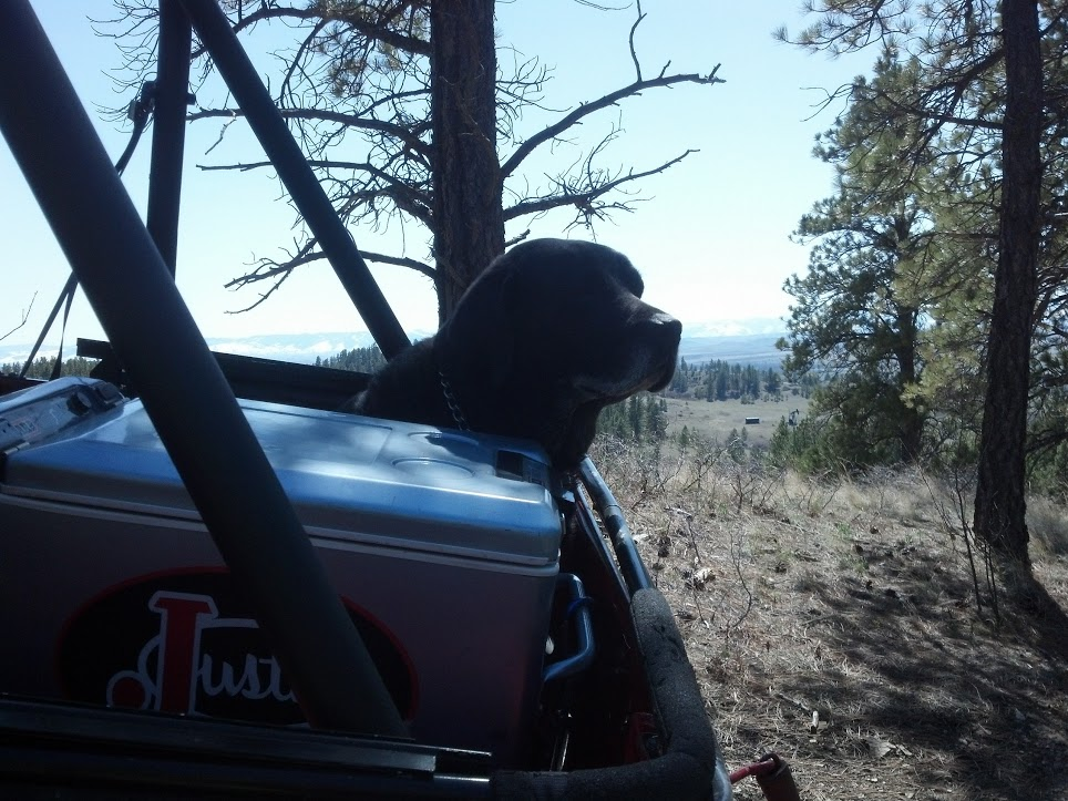 and of course Mojo was up for the ride -