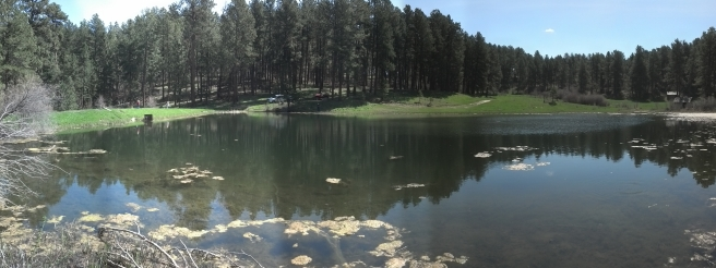 Trout Fishing 4H Pond